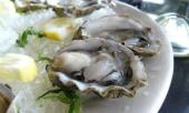 GASTRO OFFER-SEASHELL