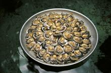Oysters in Bay of Mali Ston