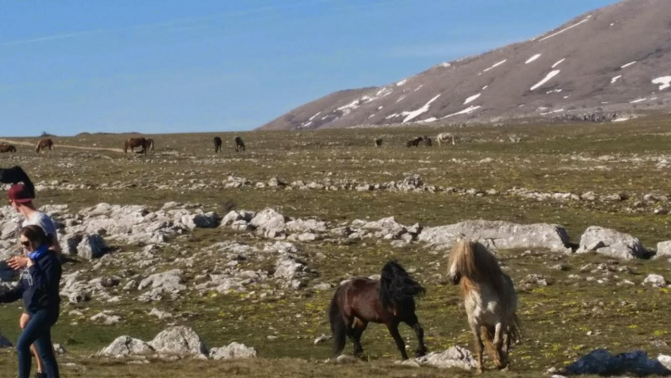 Walking tour: Wild Horses, Livno